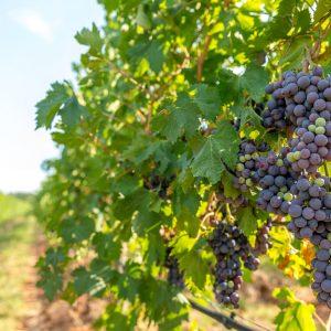 Valgatara Valpolicella Vantorosso Vanni Pasquali Wijnhandel Valgatara Belgie 11