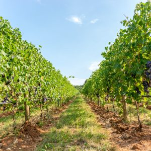 Valgatara Valpolicella Vantorosso Vanni Pasquali Wijnhandel Valgatara Belgie 12