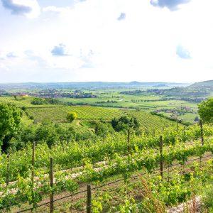Valgatara Valpolicella Vantorosso Vanni Pasquali Wijnhandel Valgatara Belgie 15