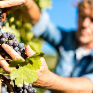 Valgatara Valpolicella Vantorosso Vanni Pasquali Wijnhandel Valgatara Belgie 16