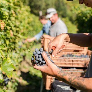 Valgatara Valpolicella Vantorosso Vanni Pasquali Wijnhandel Valgatara Belgie 18