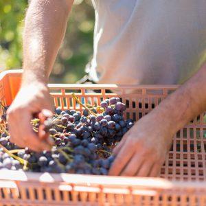 Valgatara Valpolicella Vantorosso Vanni Pasquali Wijnhandel Valgatara Belgie 20