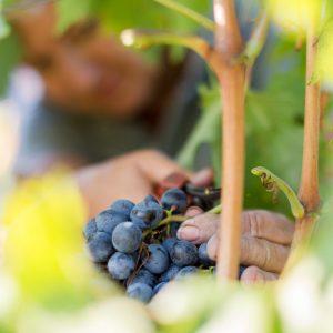 Valgatara Valpolicella Vantorosso Vanni Pasquali Wijnhandel Valgatara Belgie 22