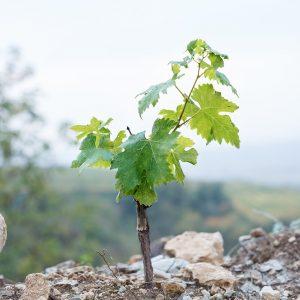 Valgatara Valpolicella Vantorosso Vanni Pasquali Wijnhandel Valgatara Belgie 30