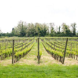 Valgatara Valpolicella Vantorosso Vanni Pasquali Wijnhandel Valgatara Belgie 32