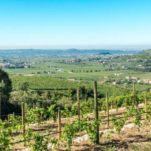 Valgatara Valpolicella Vantorosso Vanni Pasquali Wijnhandel Valgatara Belgie 54
