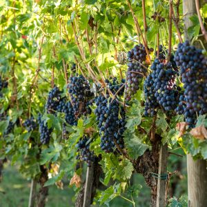 Valgatara Valpolicella Vantorosso Vanni Pasquali Wijnhandel Valgatara Belgie 60