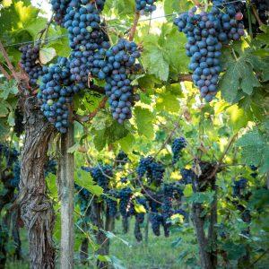 Valgatara Valpolicella Vantorosso Vanni Pasquali Wijnhandel Valgatara Belgie 61