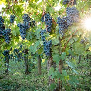 Valgatara Valpolicella Vantorosso Vanni Pasquali Wijnhandel Valgatara Belgie 62