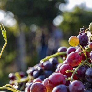 VALGATARA Wijnhandel Belgie wijnen della Valpolicella Crosarola Amarone Ripasso Recioto Amarone Riserva